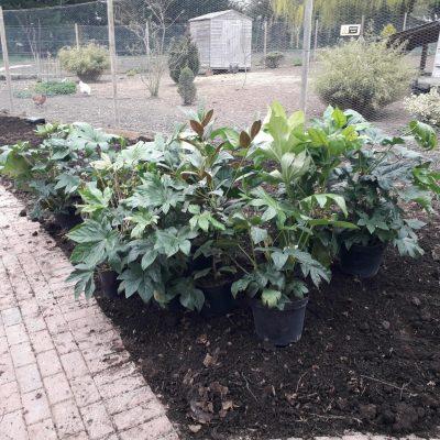 Delrow Social Farm & Garden Open Day